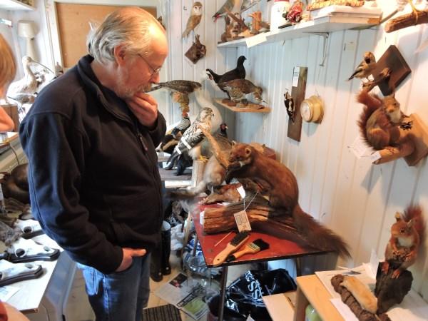 Henk Beijering in zijn ontvangstruimte met de boommarter.